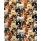 Algodón Americano Gatos Multi